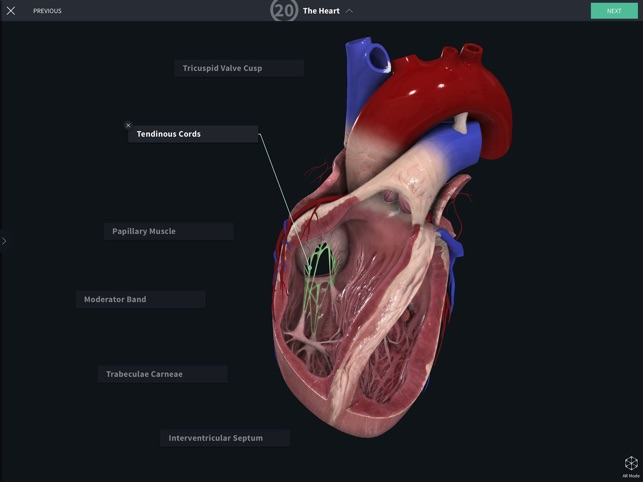 Complete Anatomy 19 For Ipad On The App Store