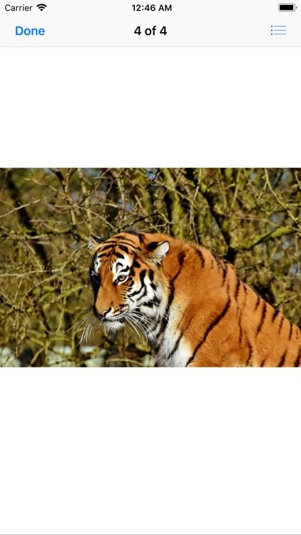 Real Tiger Stickers screenshot-4