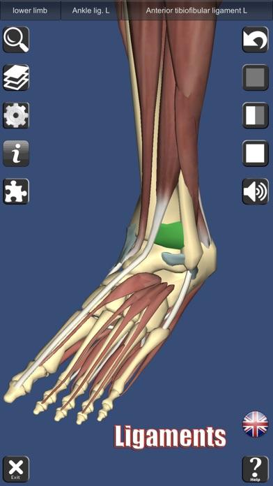 3D Anatomy Screenshots