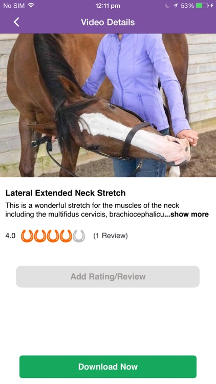 Stretch Your Horse
