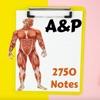 Human Anatomy & Physiology A&P