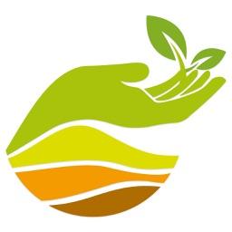 Mitti organic