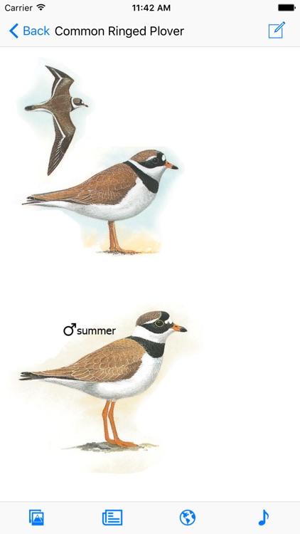 Iberian Peninsula Bird ID