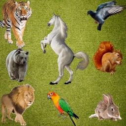 Real Animals Emoji Stickers