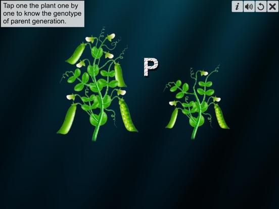 Monohybrid Cross screenshot 11