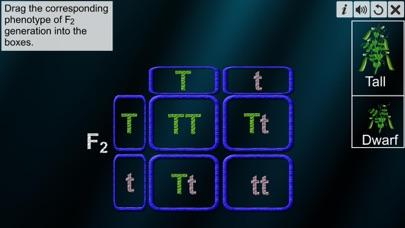 Monohybrid Cross screenshot 8