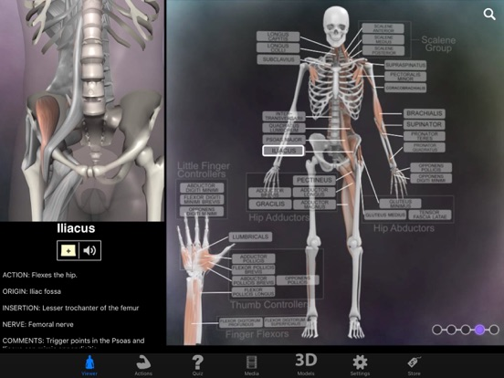 Muscle & Bone Anatomy 3Dのおすすめ画像4