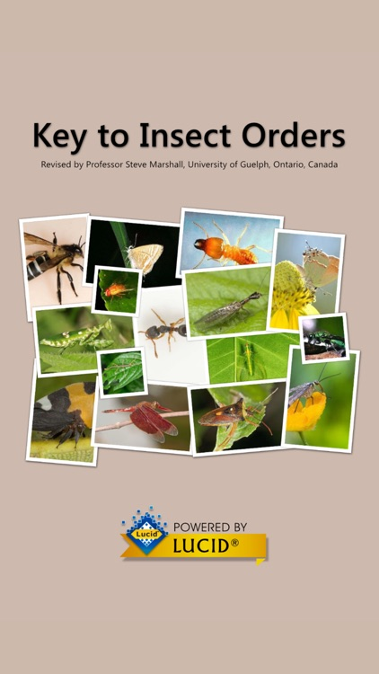 Key to Insect Orders - Revised
