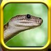 Snake Rampage - A Snake Game