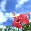 脱出ゲーム 沖縄からの脱出 - iPhoneアプリ