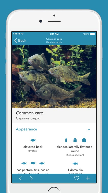 Fishes PRO - Field Guide