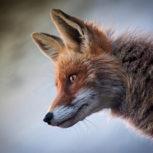 Animal Sounds - Nature Calls