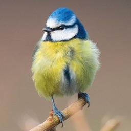Redland Green Bird Box Survey