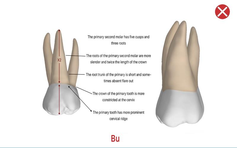 Dental Corpus Primary скриншот программы 5