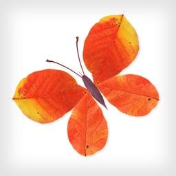 Labo Leaves:Art Game for Kids