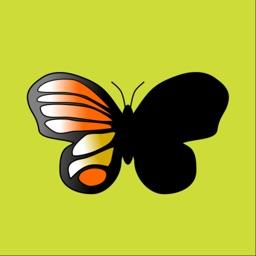Shapes of Butterflies