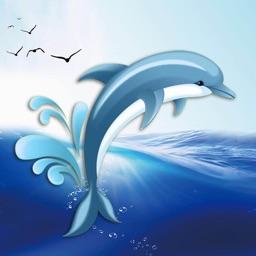 蓝海豚 - 北美华人门户APP