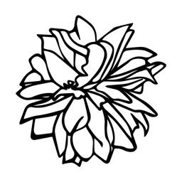 The Aromatherapy - 英國有機認證香薰