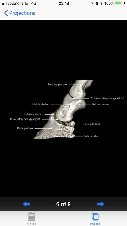Equine Radiography