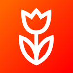 Flowwow - надежная доставка на пк