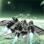 HAWK: Jeux avion de chasse