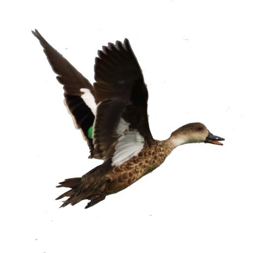 Australian Duck Call