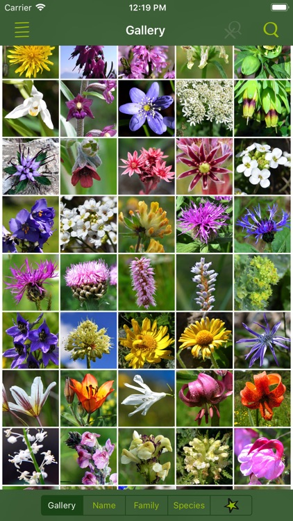 AlpineFlower Finder – Europe