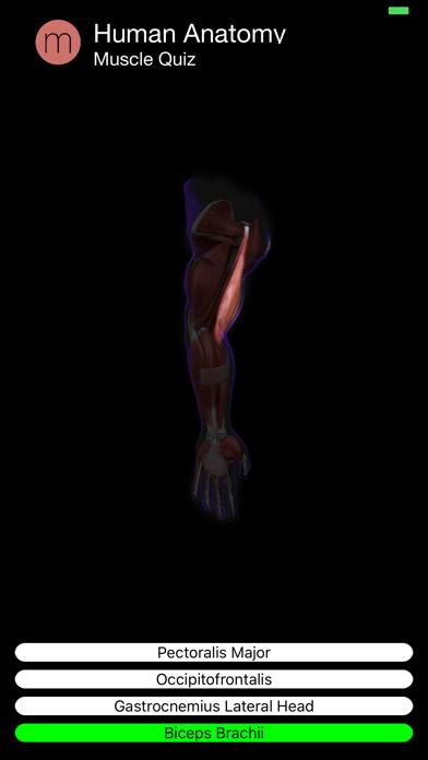 Muscle Quiz Screenshot 10