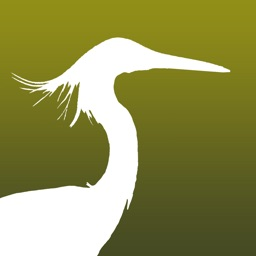 HKcBirds: Common Birds of HK