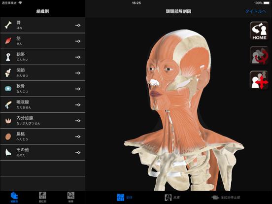 DS ANATOMY HEAD & NECKのおすすめ画像1
