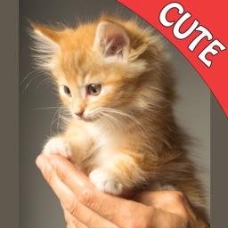 Cute Cats Memory Match Game