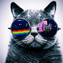 Kitty Cat Wallpapers 4K HD