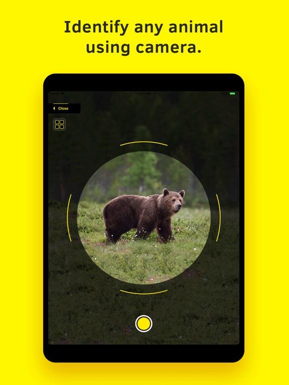 Animal Identifier. screenshot 6