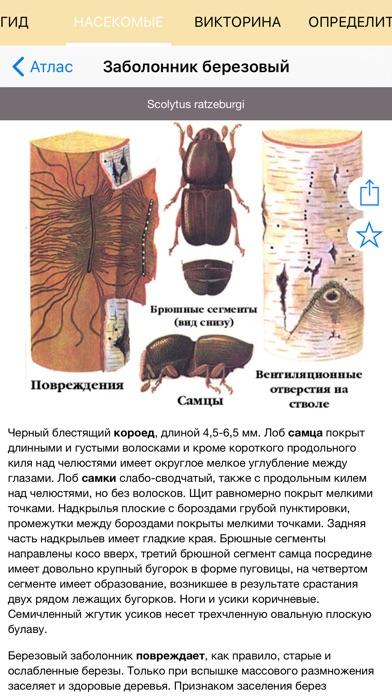 Экогид - Насекомые-вредители