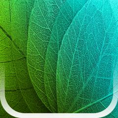 Plants Disease Identification