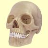 Gulsen CAKIR - Human Skeletal System Trivia artwork