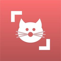 Cat Scanner