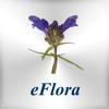 eFlora