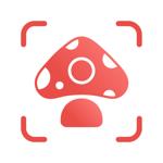 Picture Mushroom - Mushroom ID pour pc
