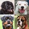 犬 - 写真付きクイズ、犬の品種一覧 - iPadアプリ