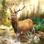Hunting Clash: Jeu de chasse
