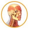 Miniatlas Anatomía - AP