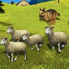 Activities of Sheep Dog : Trained Herding Dog Simulator