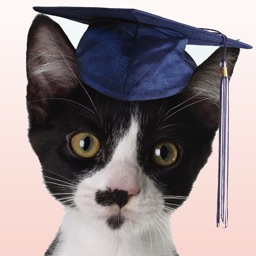 How Smart Is Your Cat? Fun Ways to Find Out!