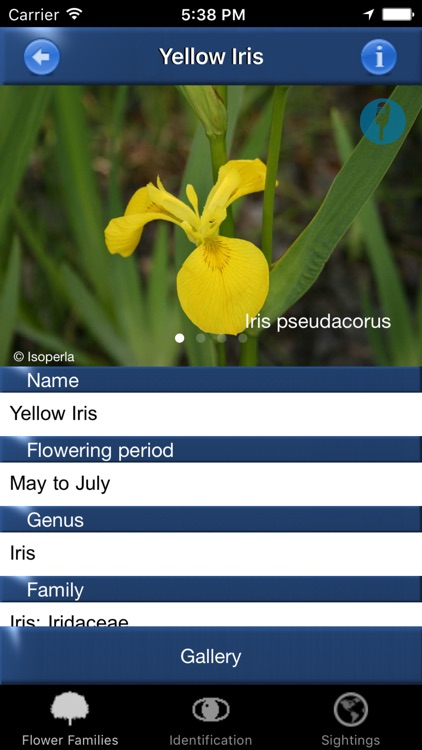 Wild Flower Id Netherlands Automatic Recognition screenshot-3