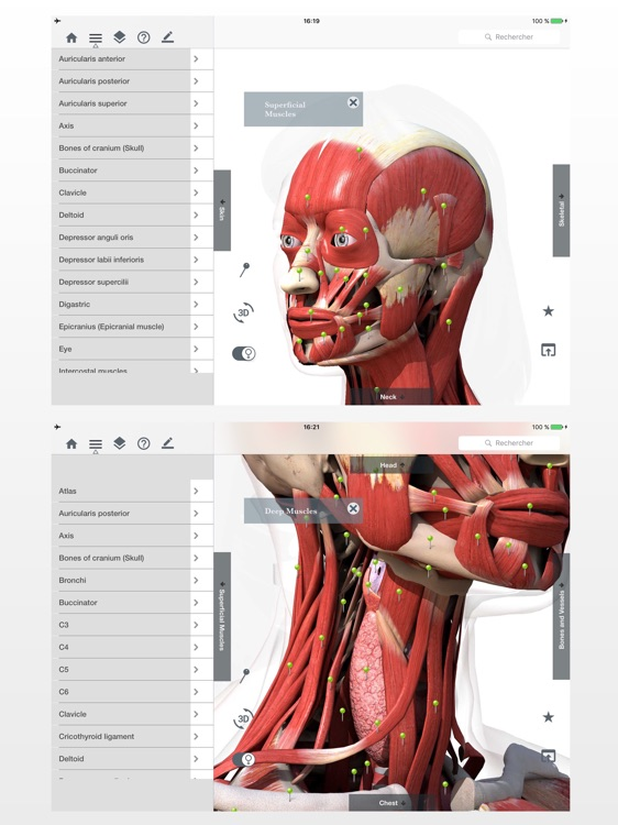 Anatomy Easy : Learn Muscles, Skeleton and Bones