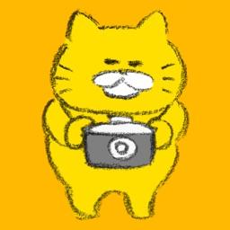 Stray Cats Camera
