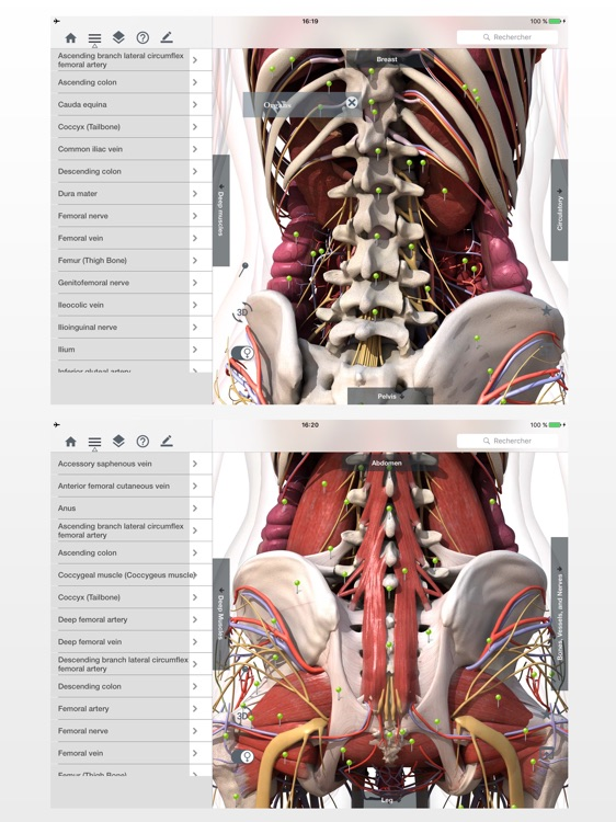 Anatomy Easy : Learn Muscles, Skeleton and Bones screenshot-2
