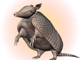 Armadillos Stickers
