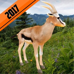 2017 African Deer Hunting Safari Survival